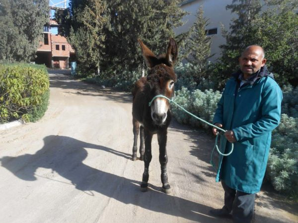 Donkey with man