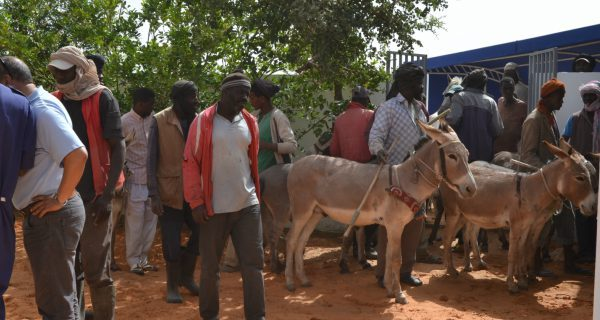 Group of people with donkeys outside