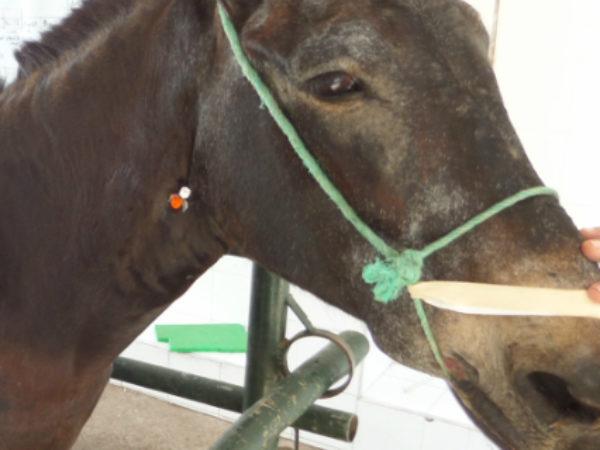 Horse in a livestock pen