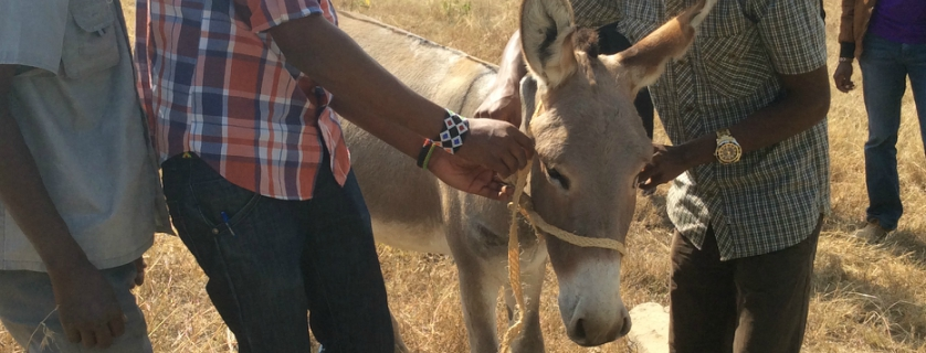 Donkey and owners