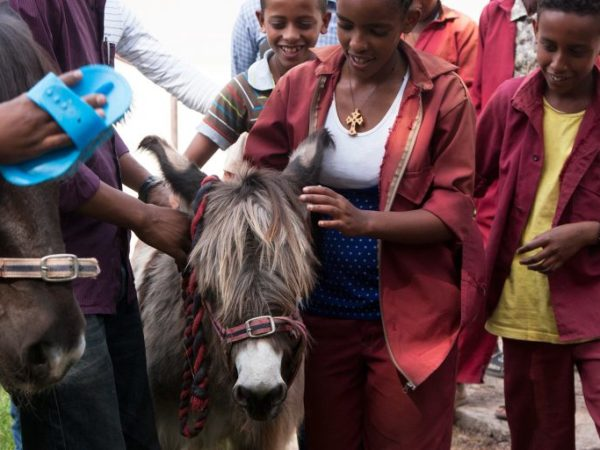 Children with a donkey