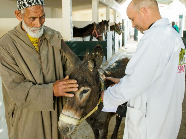 Morocco man with his donkey and a vet
