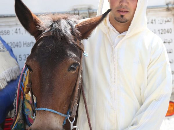 Brown mule with owner