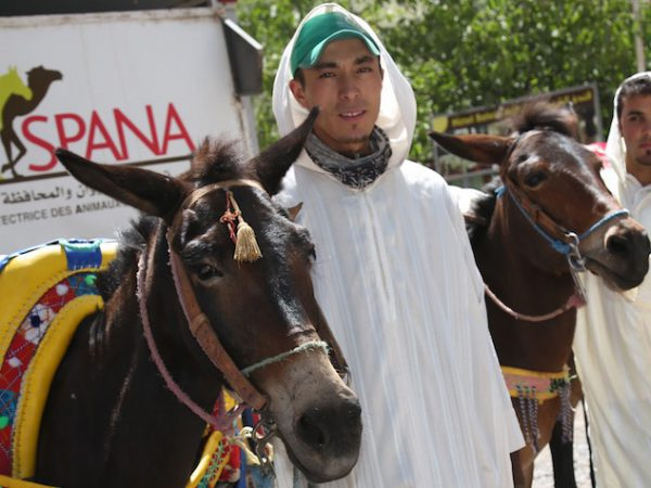 Mules with owners