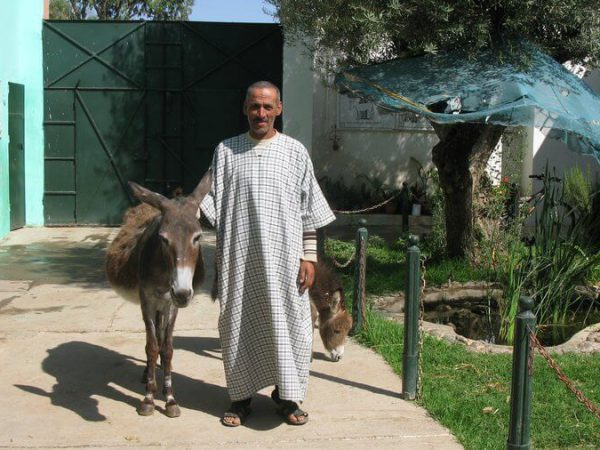 Saida the donkey and her owner