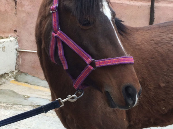 a horse wearing a pink headcollar