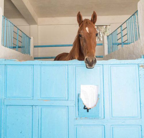 Brown horse in blue stable stall
