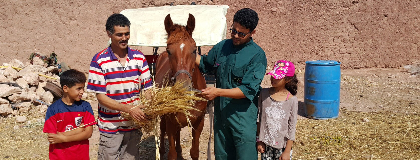 a horse eating some hay with his owners