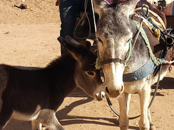 Wassima the donkey pulling a cart