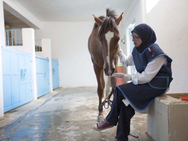 Horse standing next to woman sitting