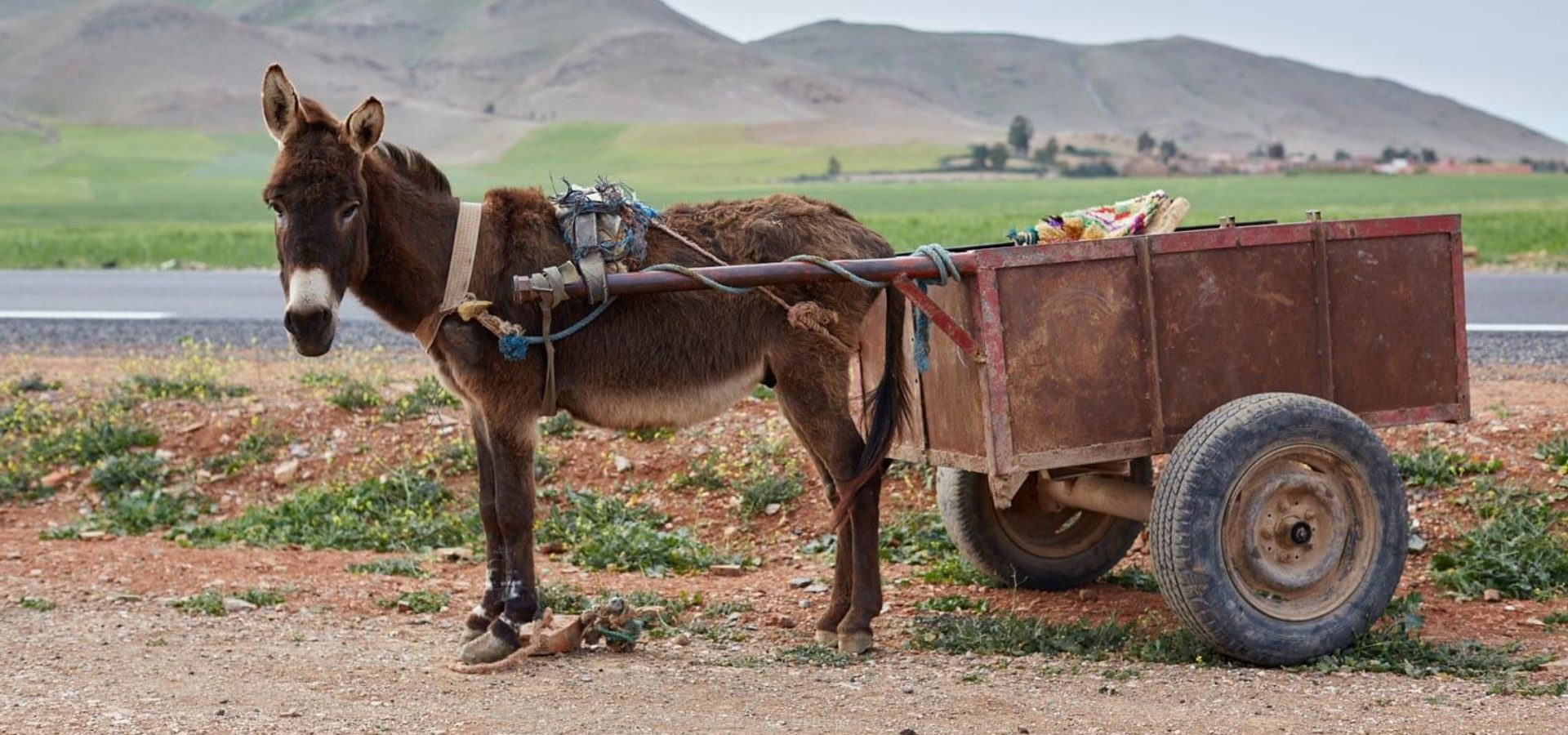 a donkey pulling a cart in morocco