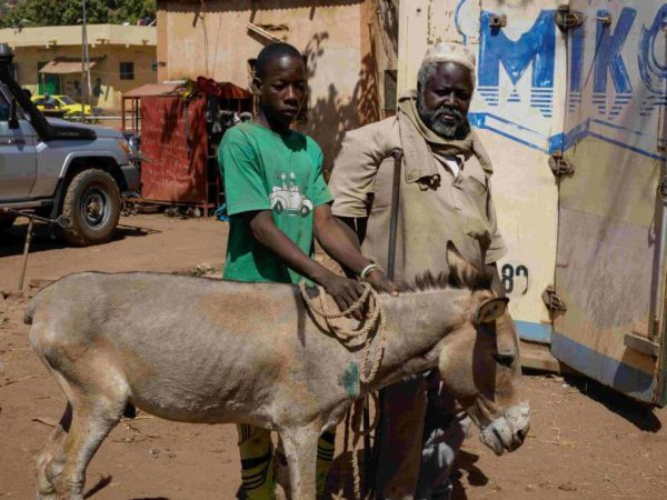 two men with a donkey in Mali