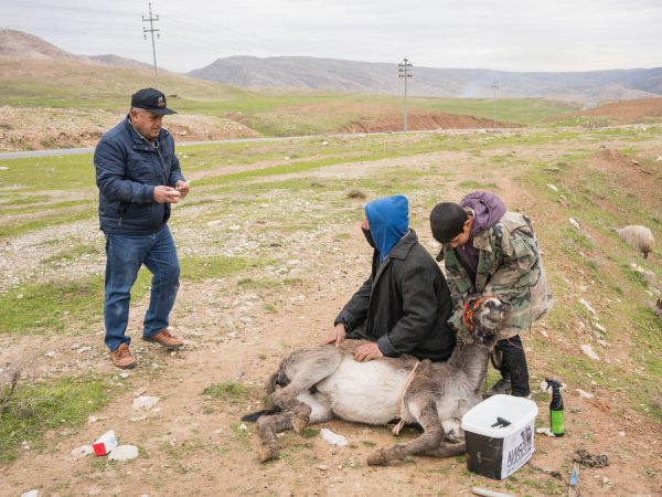 A Kurdish herder and his donkey at a mobile clinic