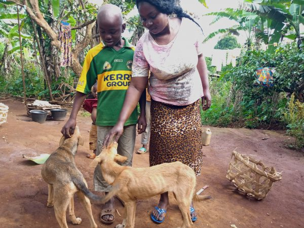 A mother and son pet their dogs.