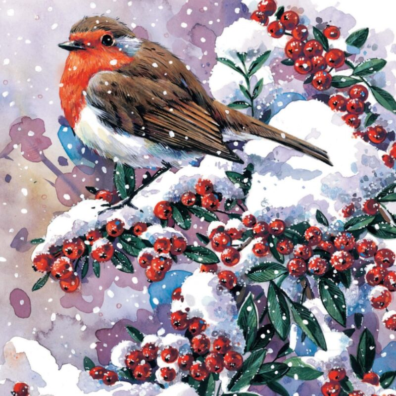 Christmas card design featuring a robin on a holly branch