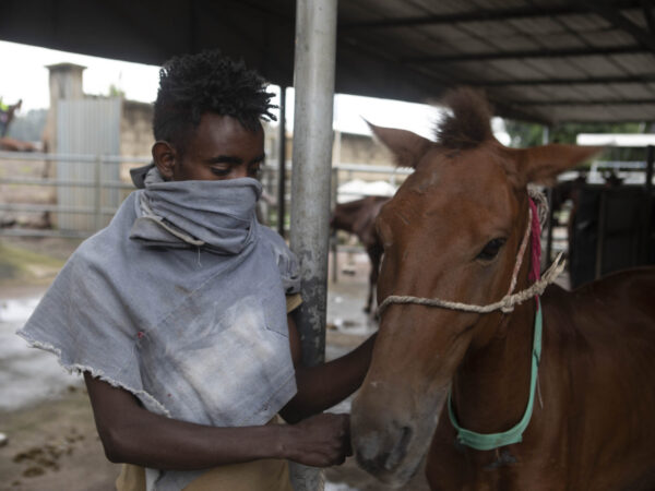 An owner and carthorse wait for treatment in Bishoftu, Ethiopia